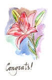Watercolor  lilies Stock Images