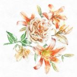 Watercolor Lily Illustration Hand Drawn Floral Card With Flowers Rose Royalty Free Stock Image