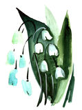 Watercolor Lily of the valley flowers impression painting. In white background Vector Illustration