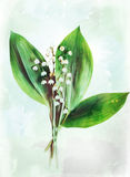 Watercolor lily of the valley. Illustration of watercolor lily of the valley. Artistic watercolor painting style with texture Royalty Free Stock Photo