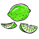 Watercolor  lime fruit set Royalty Free Stock Photography