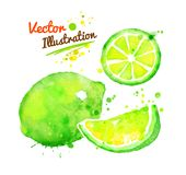 Watercolor lime Stock Photos