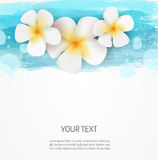 Watercolor lines and frangipani flowers background template. Background template with watercolor imitation lines and three frangipani flowers Stock Image