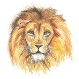 Watercolor lion head. Watercolor lion head. African predator and exotic animal. Colorful art Royalty Free Stock Photography