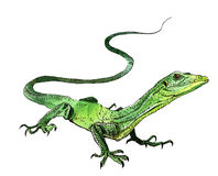 Watercolor lizard, hand painted drawing of outline Stock Photography