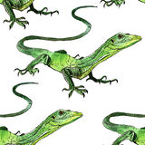 Watercolor lizard, hand painted drawing of outline Stock Images