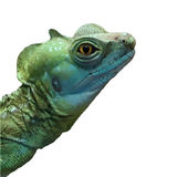 Watercolor lizard Royalty Free Stock Photo