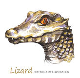 Watercolor Lizard on the white background. Exotic animal. Royalty Free Stock Images