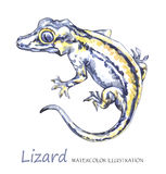 Watercolor Lizard on the white background. Exotic animal. Royalty Free Stock Photography