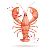 Watercolor lobster. Stock Images