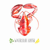 Watercolor lobster. Stock Photography