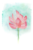 Watercolor of lotus flower. Abstract watercolor illustration of blossom pink lotus flower. Watercolor painting on paper stock illustration