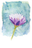 Watercolor of lotus flower. Abstract watercolor illustration of blossom purple lotus flower. Watercolor painting on paper stock illustration