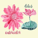 Vector illustration. Lotuses Decorative symbol. Stock Photos