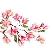 Watercolor magnolia flower card. Stock Image