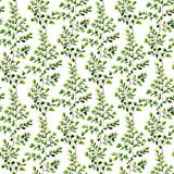Watercolor maidenhair fern seamless pattern. Hand painted fern o. Rnament. Floral illustration isolated on white background. For design, textile and background Stock Photo