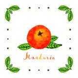 Watercolor mandarin with green leaves vector background Royalty Free Stock Photo