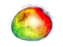 Watercolor mango royalty free stock images