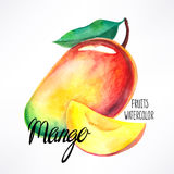 Watercolor mango Royalty Free Stock Photo