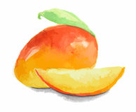 watercolor mango. Stock Photo