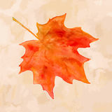 Watercolor maple leaf Stock Images