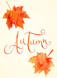 Watercolor maple leaves and Autumn word Royalty Free Stock Photo