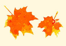 Watercolor maple leaves Royalty Free Stock Photography