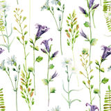 Watercolor meadow flowers seamless pattern. Watercolor bellflowers and herbs background. Hand painted illustration Royalty Free Stock Image