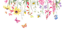 Watercolor meadow herbal, chamomile and butterflies Royalty Free Stock Photo