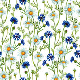 Watercolor meadow seamless pattern Royalty Free Stock Photo