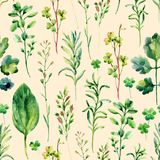 Watercolor meadow weeds and herbs seamless pattern. Watercolor wild field herbs background. Hand painted illustration Stock Photo