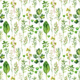 Watercolor meadow weeds and herbs seamless pattern. Watercolor wild field herbs background. Hand painted illustration Royalty Free Stock Photography