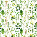 Watercolor meadow weeds and herbs seamless pattern. Watercolor wild field herbs background. Hand painted illustration Royalty Free Stock Images