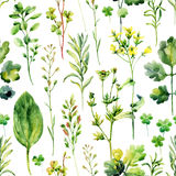 Watercolor meadow weeds and herbs seamless pattern. Watercolor wild field herbs background. Hand painted illustration Royalty Free Stock Photos