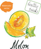 Watercolor melon Stock Photography