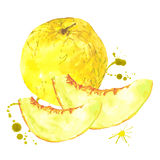 Watercolor melon, summer hand drawn fruit Royalty Free Stock Image