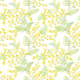Watercolor mimosa vector pattern. Beautiful seamless vector pattern with hand drawn watercolor mimosa flowers royalty free illustration