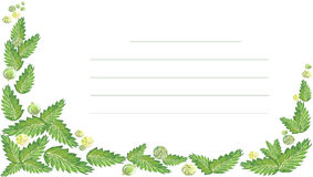 Watercolor mint berry green. Watercolor illustration with place for signature of leaves of mint and berries of gooseberry green on white background Royalty Free Stock Image