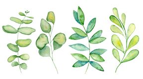 Watercolor mistletoe and eucalyptus leaves stock images