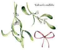Watercolor mistletoe set. Hand painted mistletoe branch with white berry and red bow isolated on white background. Christmas botanical clip art for design or vector illustration