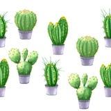 watercolor Modello senza cuciture con la pianta del cactus in un vaso Fotografie Stock