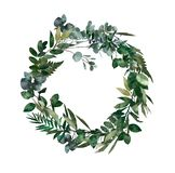 Watercolor modern decorative element. Eucalyptus round Green leaf Wreath, greenery branches, garland, border, frame, elegant. Watercolor isolated stock illustration