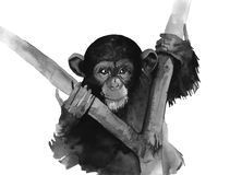 Watercolor monkey. Black and white isolated on white background royalty free illustration