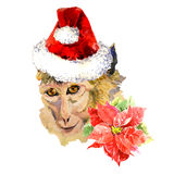 Watercolor monkey portrait in santa hat and. Watercolor monkey portrait in santa hat. Beautiful flowers around the illustration. Hand drawn graphic. Merry stock illustration