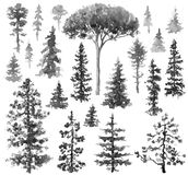 Watercolor Monochrome Conifers. Watercolor painting. Hand drawn illustration. Set of conifers and evergreen trees isolated on white. Fir and pine monochrome stock illustration