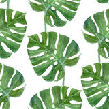 Watercolor Monstera Leaf Seamless Pattern Stock Photo