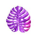 Watercolor monstera leaf stock image