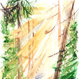 Watercolor morning yellow sunlight wood forest landscape.  royalty free illustration