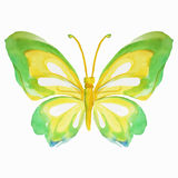 Watercolor multicolored butterfly. Vector illustration Stock Image