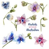 Watercolor multicolored orchids of different varieties collection stock illustration